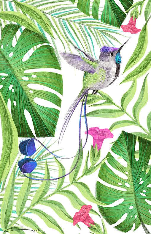 colibri-web